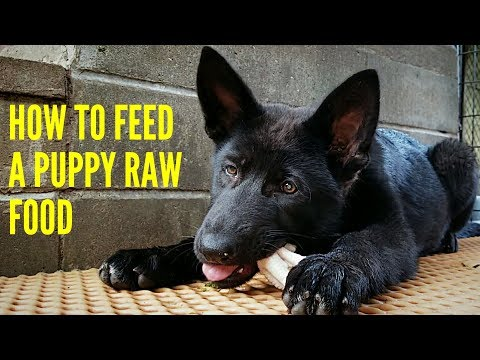 How To Feed A Puppy RAW Food