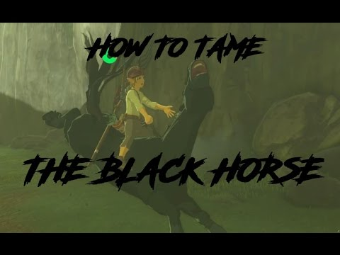 How to tame the Black Horse.