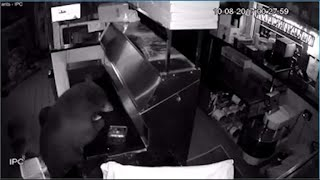 Black bears break into Colorado pizzeria