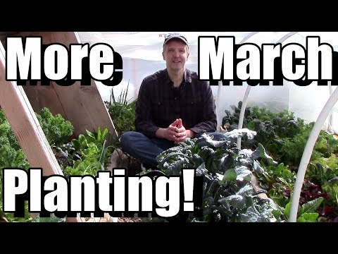 Planting Outside in March, Pt. 2 (Carrots, Beets & Turnips)