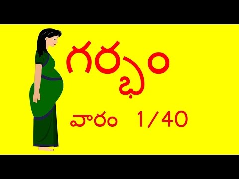 Pregnancy | Telugu | Week by Week - Week 1 | గర్భము - వారం 1 | Month 1