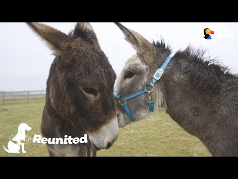 Xxx Mp4 Donkey Mom Is SO Excited To See Her Baby Again The Dodo Reunited 3gp Sex