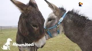Donkey Mom Is SO Excited To See Her Baby Again | The Dodo Reunited