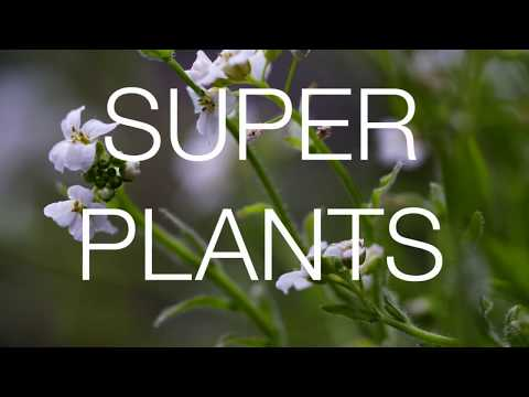 Superplants - How to make money by saving the environment Documentary Trailer