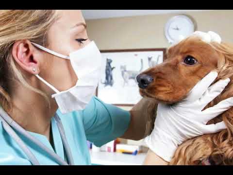 How do I Treat a Dog Stye