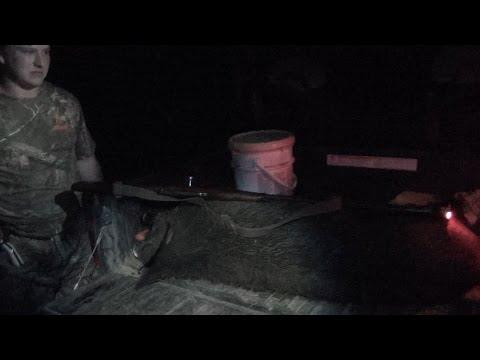 Texas Wild Boar With Mosin Nagant