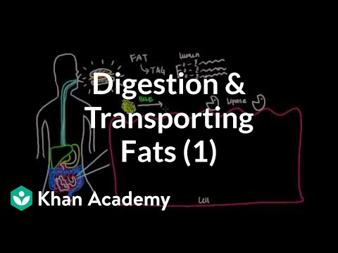 Digestion, Mobilization, and Transport of Fats - Part I