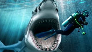 Explore Amazing Underwater World at Shark Mountain - Documentary