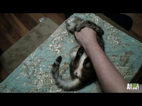 Poor Cat, Foley, Is Terrorized by Nightmares | My Cat From Hell