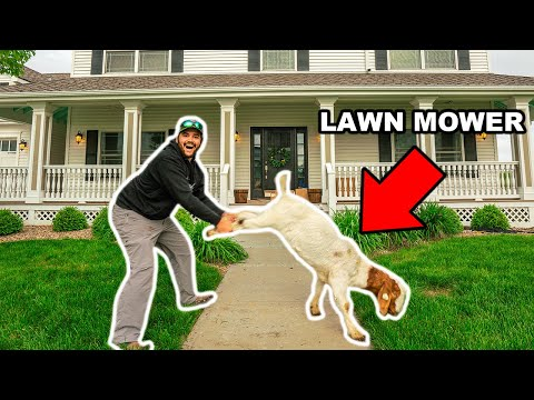 Mowing My FRONT YARD with My PET GOAT!!! (Life Hack)