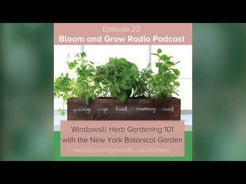 How to make a Windowsill Herb Garden work for an apartment