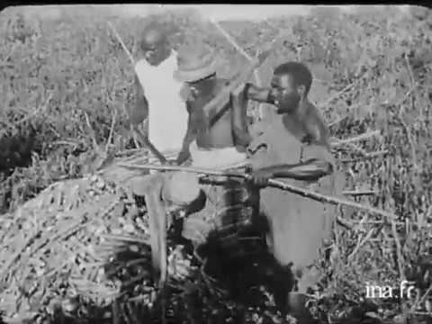 Cassava (Manioc / Yuca) Plantations in Madagascar Early 20th Century - Nosy Be & Diego-Suarez