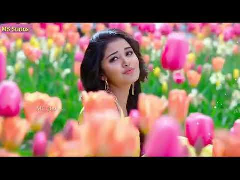 Xxx Mp4 Sikandar Tiu DJ Nagpur Video 2019 9136516836 3gp Sex