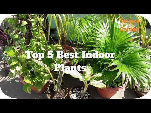 Top 5 Best Indoor Plants // Easy to Care And Grow  Indoor Plants That Purify Air.