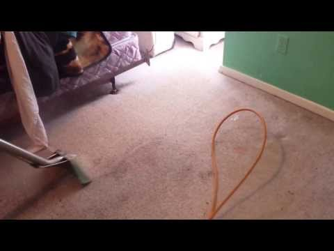 Deep steam carpet cleaning heavy traffic pet stains and odor.
