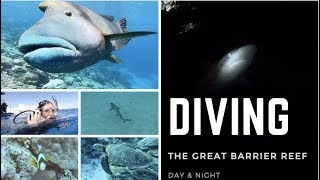 Diving On The Great Barrier Reef | Sharks at NIGHT, Turtles,