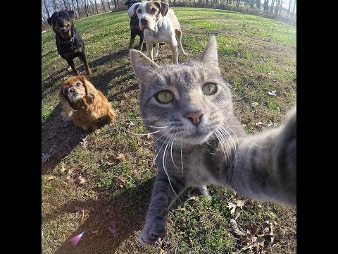 This Cat is Better than You at taking Selfies