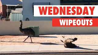 Wednesday Wipeouts