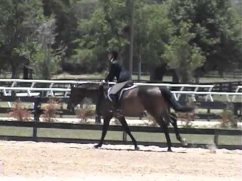 Cavantos VDL - first time in the ring