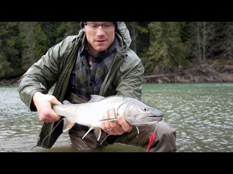 Fly Fishing Monster Bull Trout-Sexy Fish Action