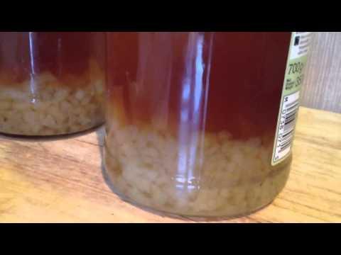 Water Kefir Grains Incredible Growth After 1 Week