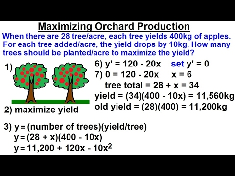 Calculus 1: Max-Min Problems (14 of 30) Maximizing Apple Orchard Production