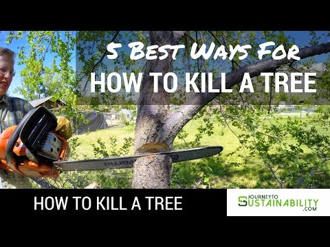 5 Best Ways For How To Kill A Tree - How To Kill A Tree - Journey To Sustainability
