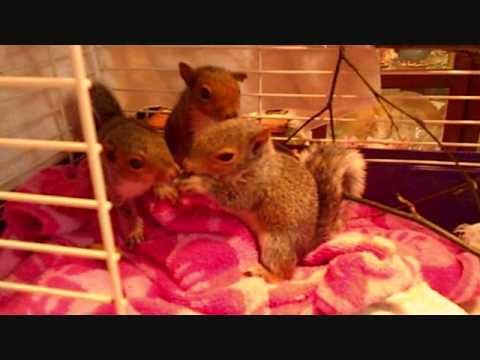 Baby squirrels eating apples_0001.wmv