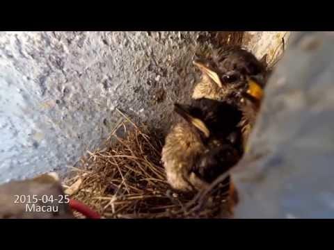 Peeping Nest