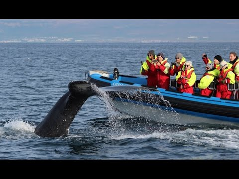 Big Whale Safari & Puffins Húsavík Iceland