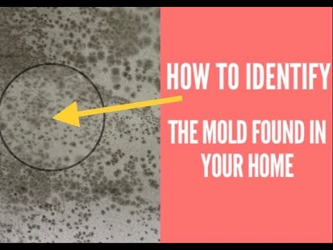 How To Identify Mold Found In Your Home: Tape Lift Sample.