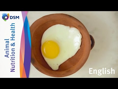 Eggs are part of your every day's healthy diet