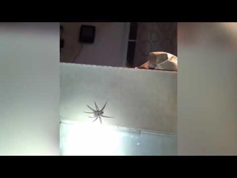 Попытка ловли паука :D