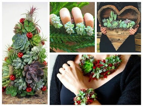 DIY Succulents Crafts Ideas - Amazing Succulent Planting Projects