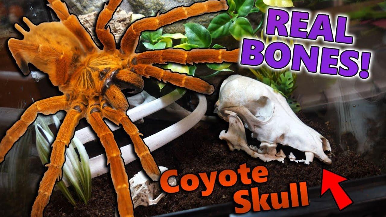 Building a Graveyard-Themed Tarantula Enclosure!