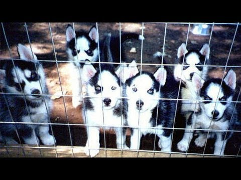 What is a Backyard Breeder?