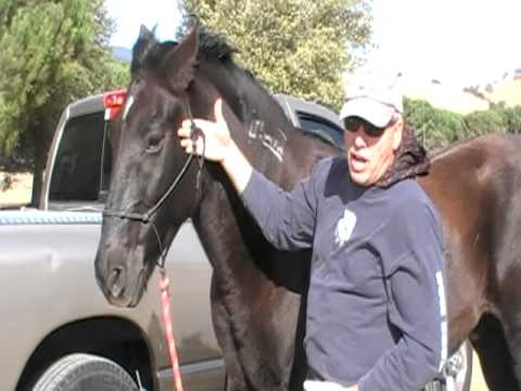 Proper fit of a Horse rope halter and cowboy halter - Rick Gore Horsemanship