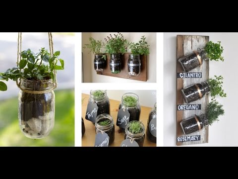 Grow Fresh Ingredients at Home Using Classic Mason Jars