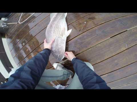 Bull red fish caught on light gear!  Galveston, TX