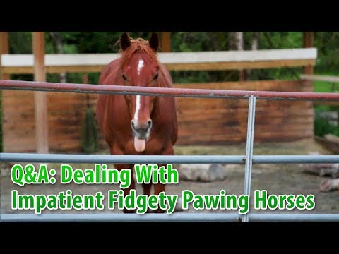 Dealing With Impatient Fidgety Pawing Horses