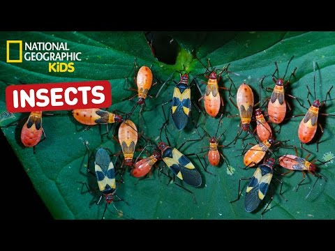 Find Out About Insects! | Nat Geo Kids Insects Playlist
