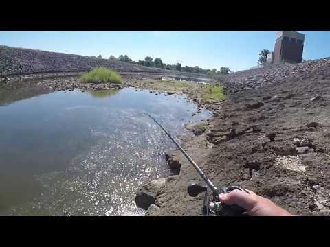 Topwater Tiger Muskie - Alum Creek Dam