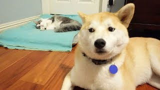 Funny Cats Stealing Dog Beds - Funny Animal Videos