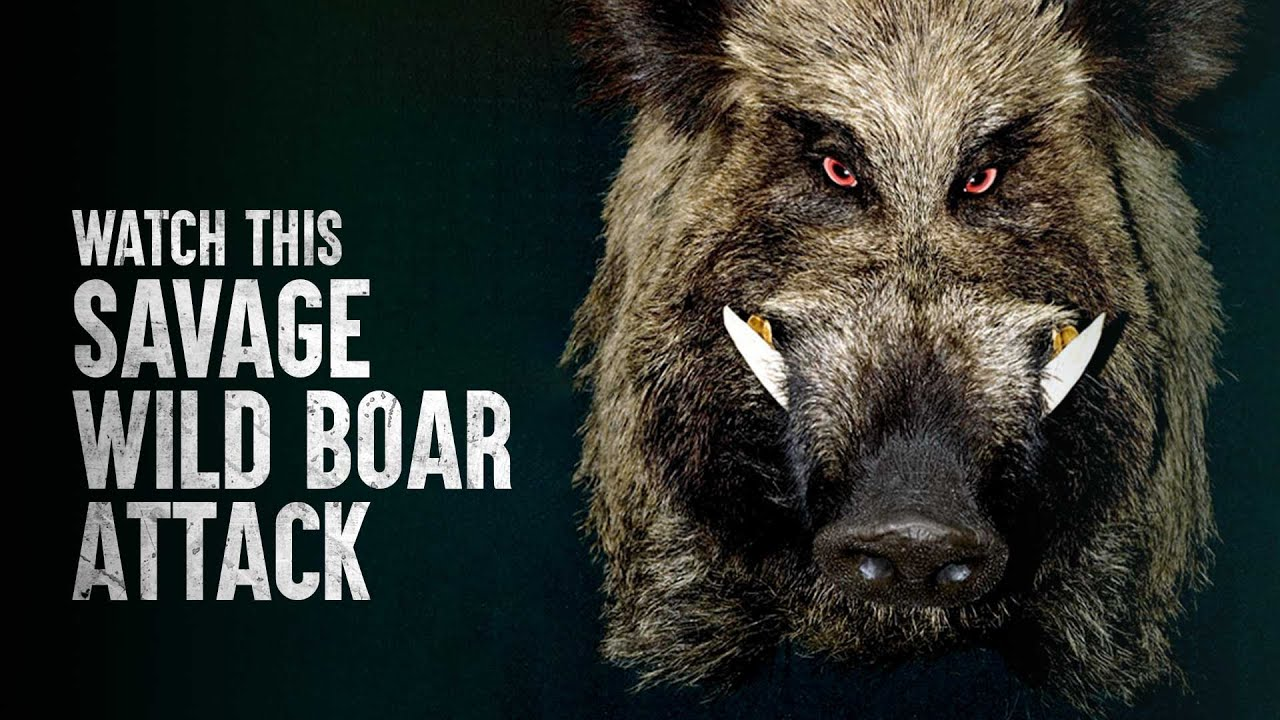 How To Survive This Scary Wild Boar Attack