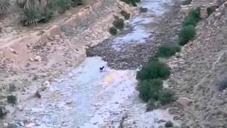جمورة بسكرة الجزائر : سبحان الله شاهد هجوم الواد على حمار