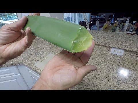 Aloe Vera for skin, hair, radiation treatment and cancer prevention - MUST WATCH!
