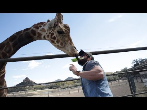 HOW TO PICK UP A GIRAFFE