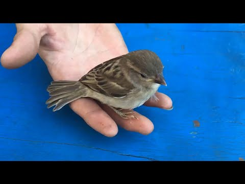 How To Make Bird House at Home - Bird Cage using with Paper