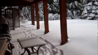 2 Dogs vs. 3 Feet of Snow
