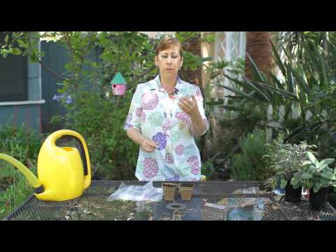 How to Plant Acorn Squash Seeds Indoors : Garden Space